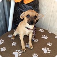 Adopt A Pet :: CHIA - Elk Grove, CA