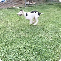 Adopt A Pet :: PILI - Calgary, AB
