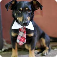 Adopt A Pet :: Clay - Dalton, GA