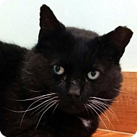 Adopt A Pet :: Bob - Brimfield, MA