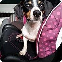 Adopt A Pet :: Hank - Gainesville, FL