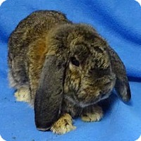 Adopt A Pet :: Toby - Woburn, MA