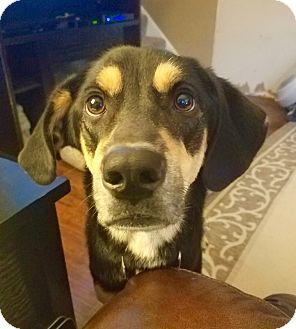 Hound (Unknown Type) Mix Dog for adoption in Davenport, Iowa - Winnie