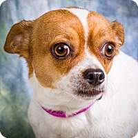 Adopt A Pet :: TAFFY - Anna, IL