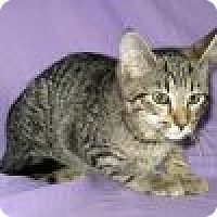 Adopt A Pet :: Skeeter - Powell, OH