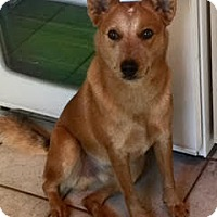 Cattle Dog Mix Dog for adoption in Dallas, Texas - zzTurner