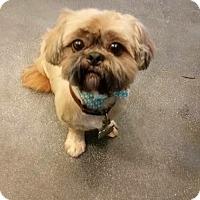 Adopt A Pet :: Baxter - Fenton, MO