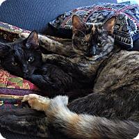 Adopt A Pet :: Kiki Jerome and Jax - Chicago, IL