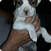 Adopt A Pet :: Ellie ready Feb 10th - Palm Bay, FL