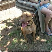 Adopt A Pet :: Red - Blanchard, OK