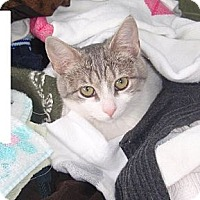 Adopt A Pet :: Sarah - Mundelein, IL