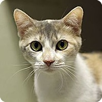 Adopt A Pet :: Doraleigh - Chicago, IL