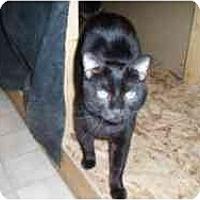 Adopt A Pet :: Sebastian - Hamburg, NY