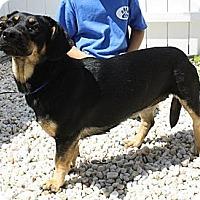 Adopt A Pet :: Freda - Bardonia, NY