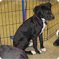 Adopt A Pet :: Maggie - Alexandria, VA