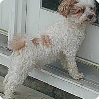 Adopt A Pet :: Gizmo(14) - Homer Glen, IL