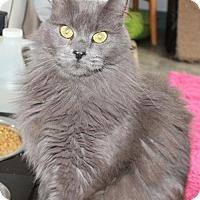 Adopt A Pet :: Sam - Red Deer, AB