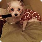 Adopt A Pet :: Susan Lucci*Adopted