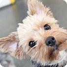 Adopt A Pet :: Pantene