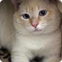 Adopt A Pet :: Colby - Merrifield, VA
