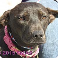 Adopt A Pet :: Bodacious 1890/25 - Madera, CA
