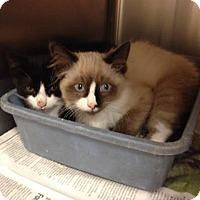 Adopt A Pet :: Reggie - McDonough, GA