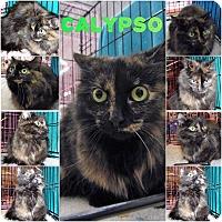 Adopt A Pet :: Calypso - Northfield, OH