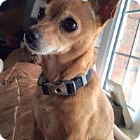 Adopt A Pet :: Queenie 3308 - Toronto, ON