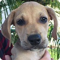Adopt A Pet :: Grandview#7F - Orlando, FL