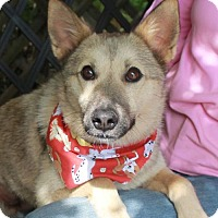 Adopt A Pet :: Holly - Garfield Heights, OH