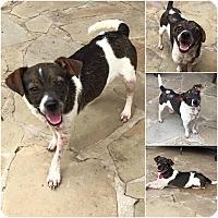 Adopt A Pet :: Chloe - Lindale, TX