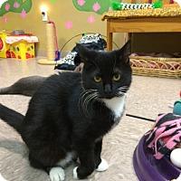 Adopt A Pet :: Gypsy - Byron Center, MI