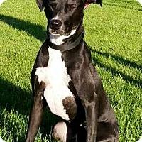 Adopt A Pet :: Bo - Elyria, OH