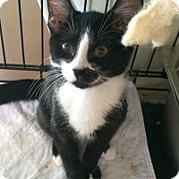Adopt A Pet :: cali #3 - Lunenburg, MA