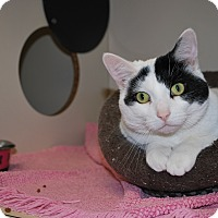 Adopt A Pet :: Mollie - New Castle, PA
