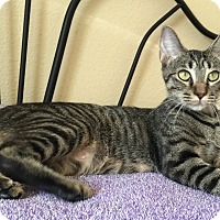 Adopt A Pet :: HALLE - SWEET EXOTIC TEEN MOM! - Plano, TX
