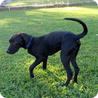 Labrador Retriever Mix Dog for adoption in Janesville, Wisconsin - Mo