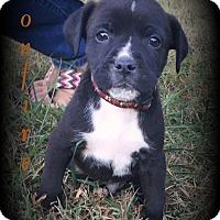 Adopt A Pet :: Bonfire - Denver, NC