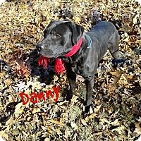 Adopt A Pet :: Danny - Princeton, KY
