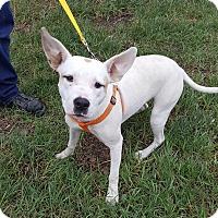 Adopt A Pet :: Bunny - Detroit, MI