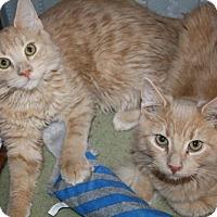 Adopt A Pet :: Cor and Corin - Jenkintown, PA