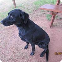 Adopt A Pet :: A078246 - Grovetown, GA