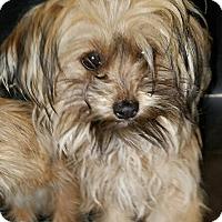 Adopt A Pet :: Jeri - Monrovia, CA