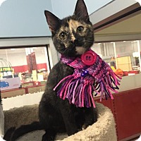 Domestic Shorthair Cat for adoption in Lutherville, Maryland - Barbie