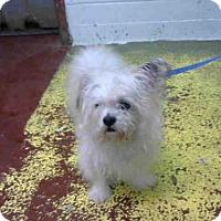 Adopt A Pet :: MANNY - Atlanta, GA