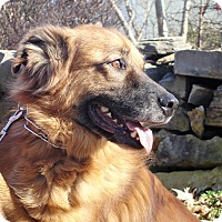 Adopt A Pet :: Copper - Clarksville, TN