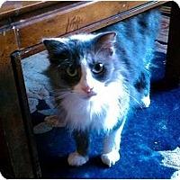 Adopt A Pet :: Puffy - Los Alamitos, CA
