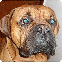 Adopt A Pet :: Diesel - Rigaud, QC