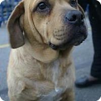 Adopt A Pet :: JAKE - Avon, OH