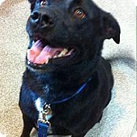 Adopt A Pet :: Sanford - Brattleboro, VT